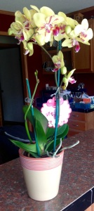 Birthday Orchid for my Florida Garden from Martha, Scott and three of my amazing grandkids.